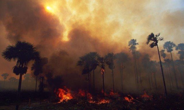 Brazil Menyelesaikan Kebakaran Hutan Amazon
